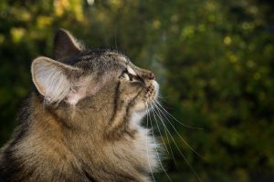 katzen allergiker geeignet